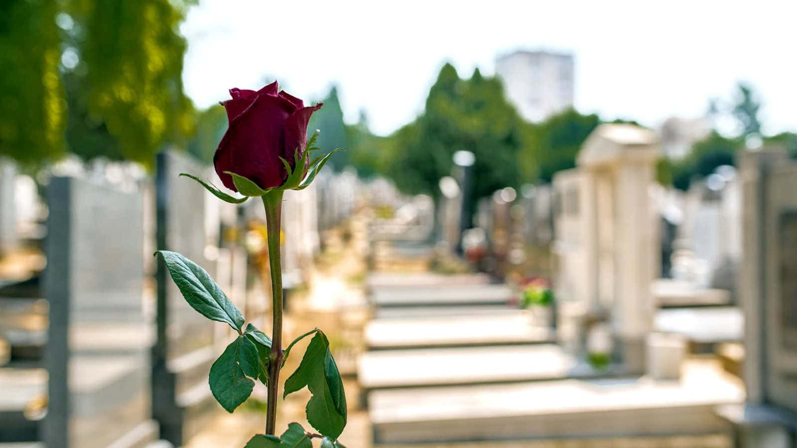 Simplicity Funerals of Rockingham
