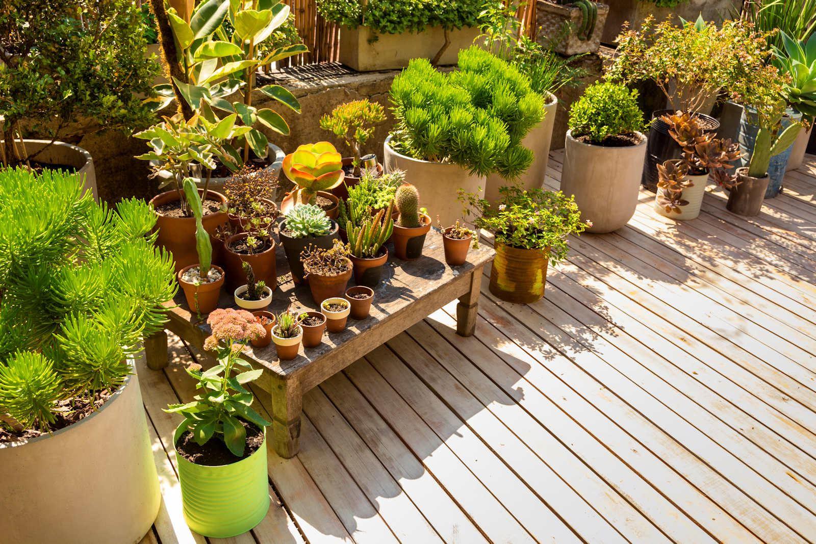 The Terrace Gardener of Dalkeith