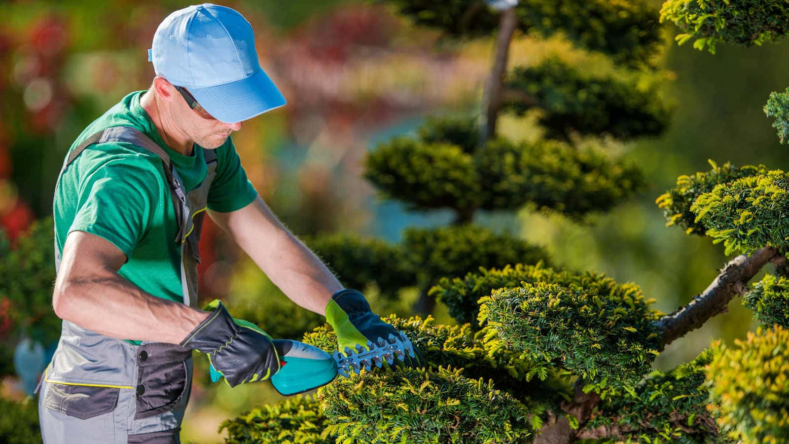 Waterwise Landscaping of Clarkson