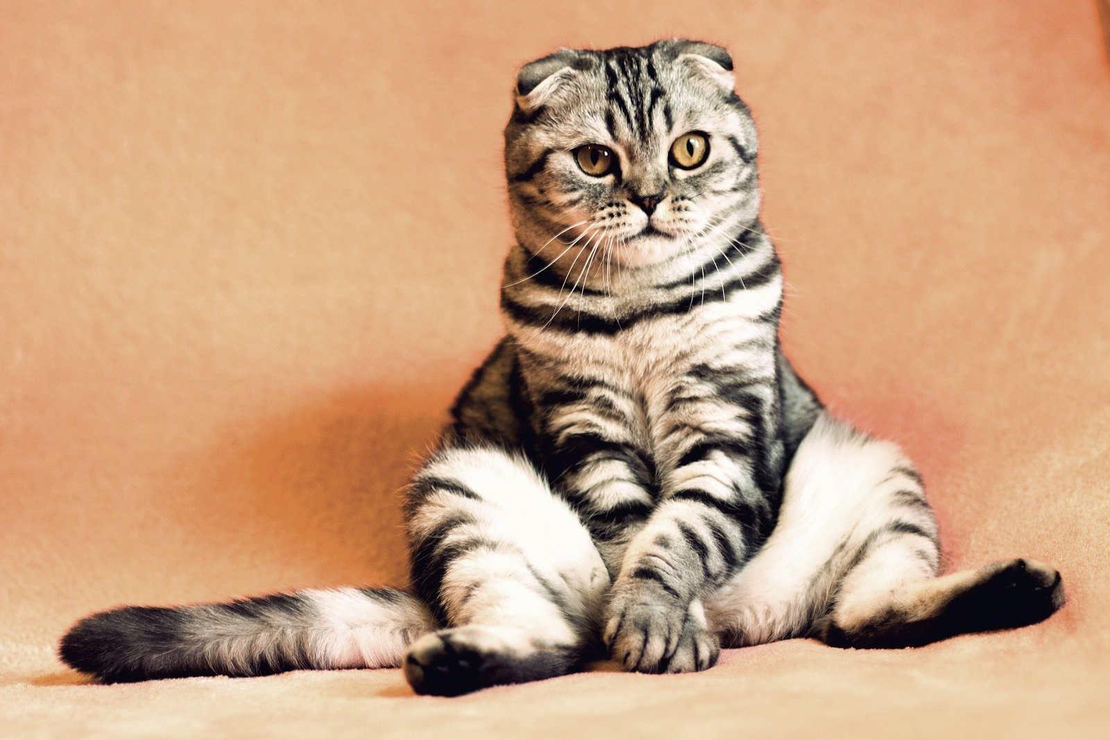 The Cat Salon of Beechboro